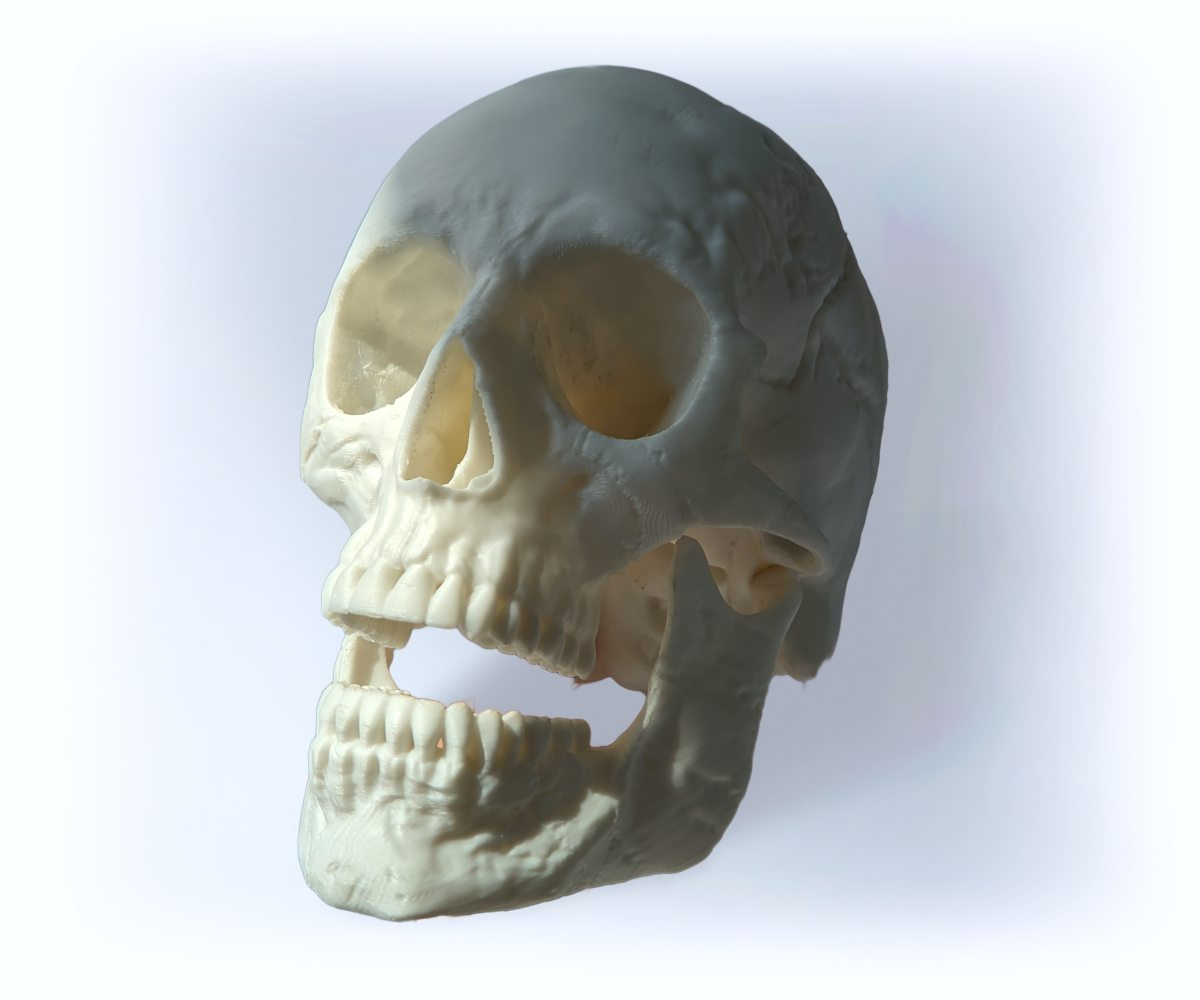 human skull 3D printed with BioCREATE filament