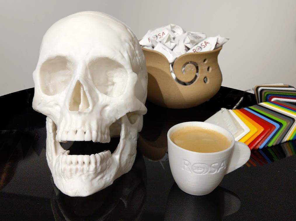 modele ludzkiej czaszki i filiżanki do kawy wydrukowane z filamentu BioCREATE